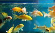 teichfische-kaufen